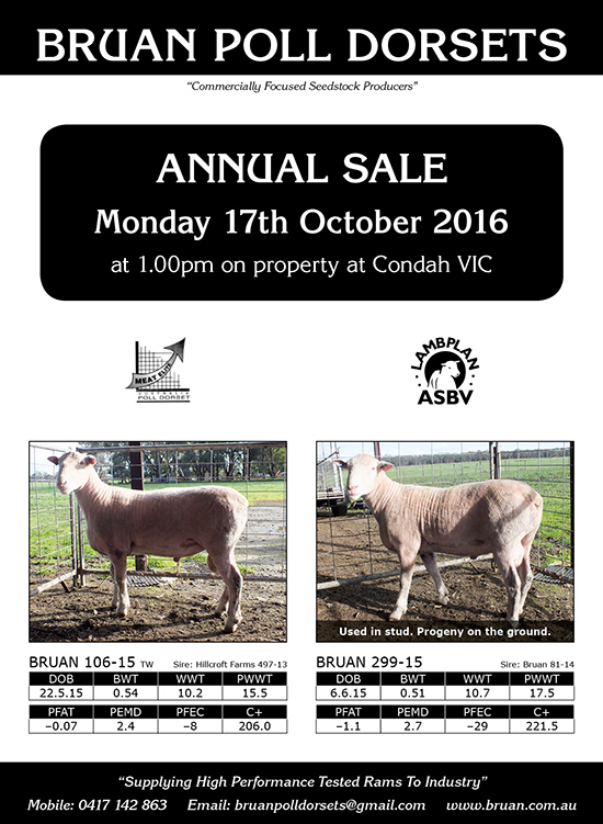 Bruan Poll Dorsets Annual sale 2016 flyer